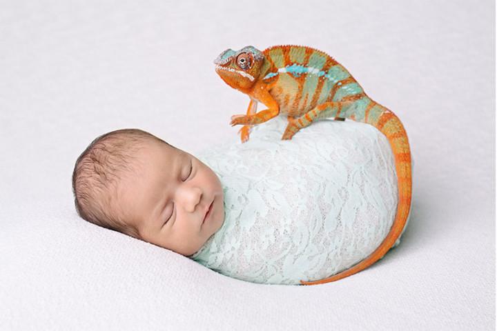 Fotografiranje novorojenčkov z Juretom in Piko ~ Kranj